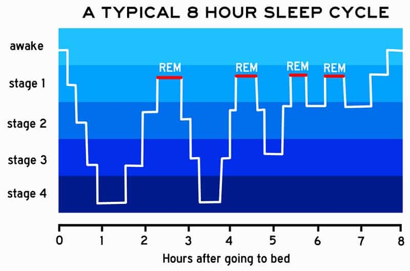 Stage of Sleep – REM (rapid eye movement)
