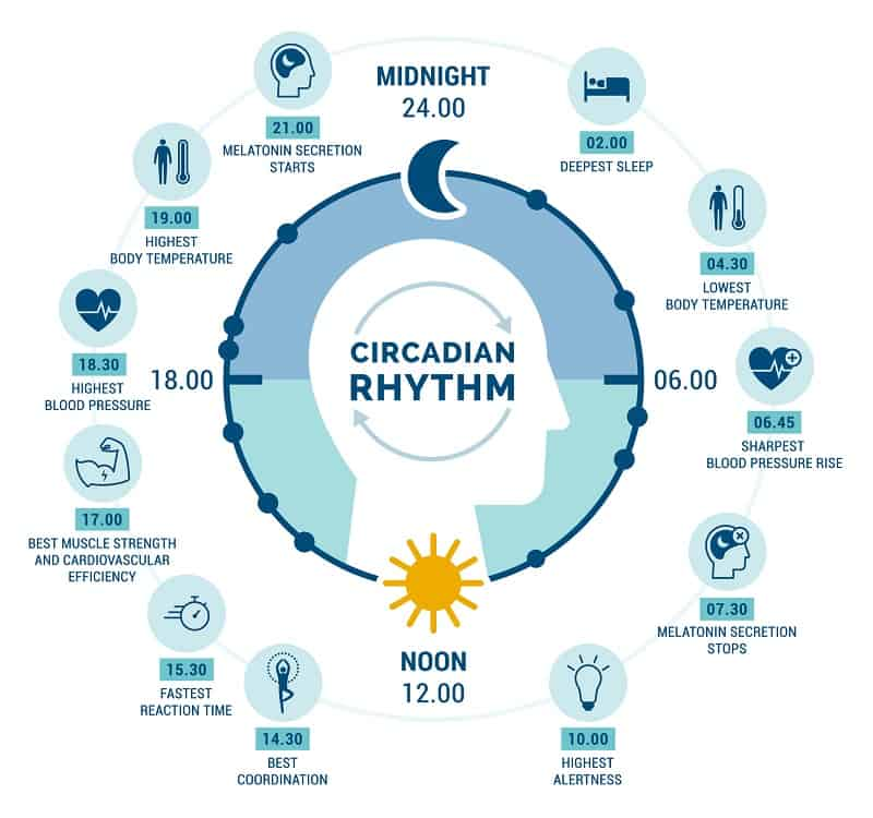 How to Force Yourself to Sleep circadian rhythm