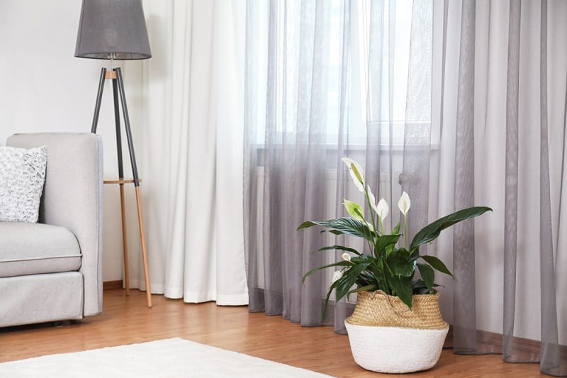 Increase Oxygen Levels While Sleeping peace lily