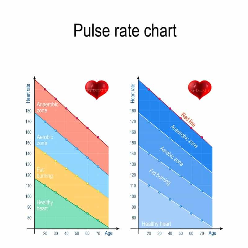 pulse rate chart