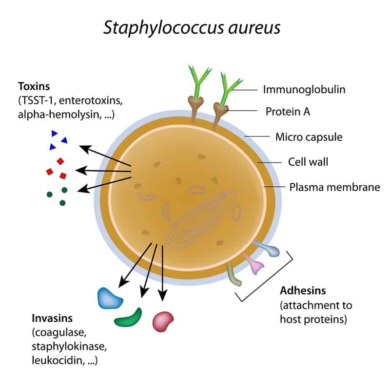 Can You Sleep With Tampon In Staphylococcus